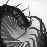 Hawaiian-Centipede1