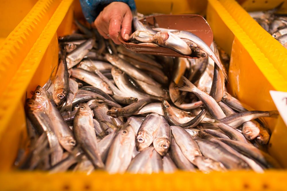 Fish at Riga central market