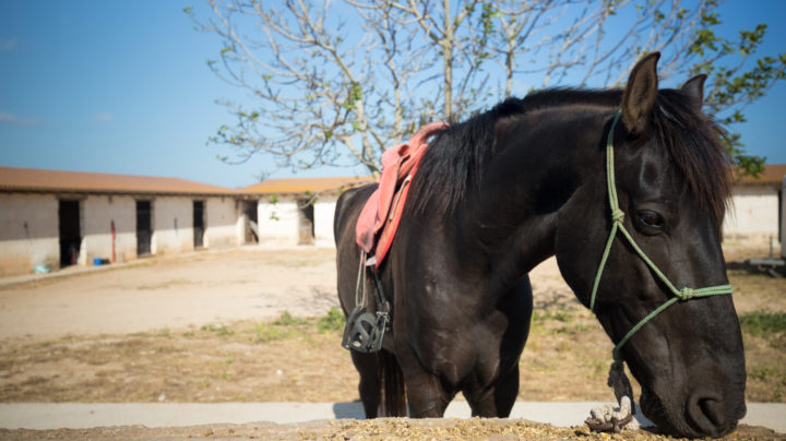 Where To Go Horse Riding In Menorca