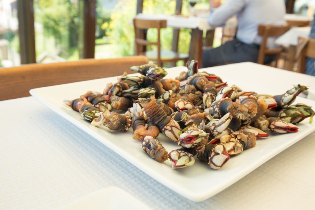 Galician barnacles at Leira Antiga