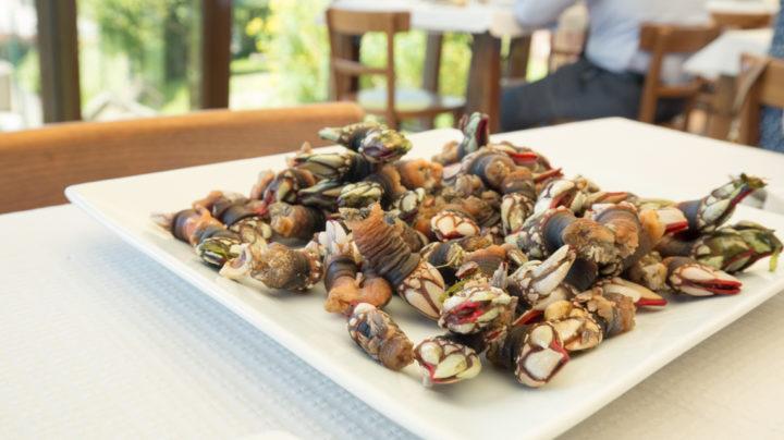 Exploring Galicia's Cuisine